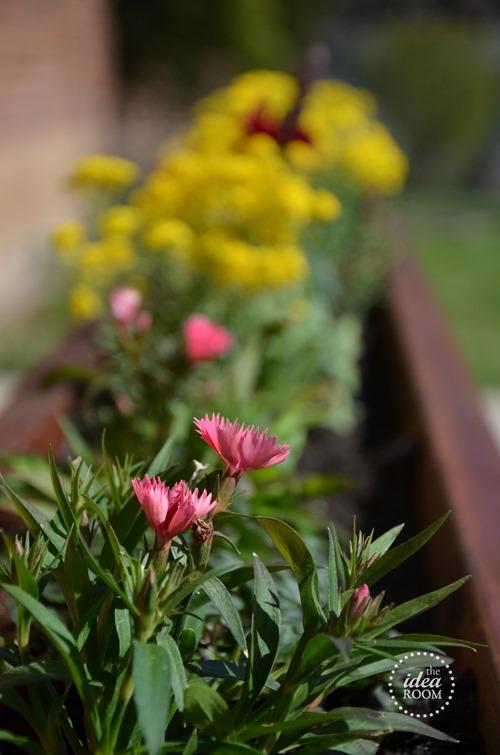 flower-planter