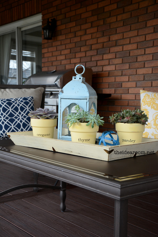 decorating-with-succulents