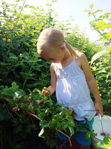 Raspberry-picking 2014
