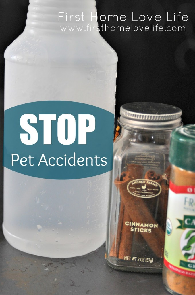 Pet accident clean up