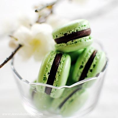 grasshopper_macaron2t
