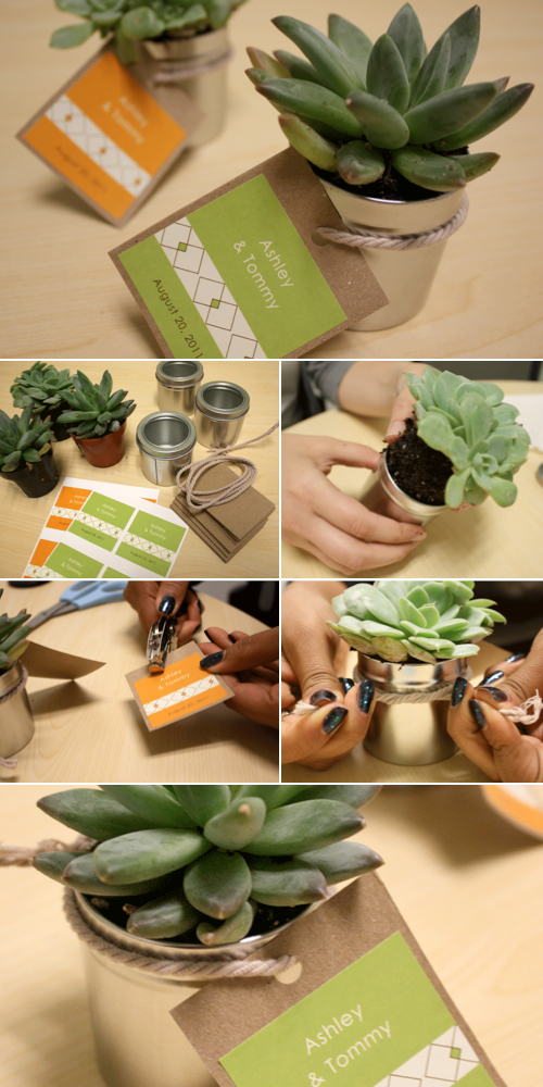 succelent-wedding-favors-diy.001