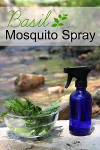 Homemade-Basil-Mosquito-Spray-Recipe