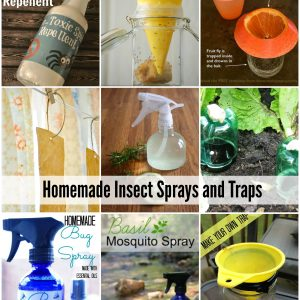 Natural Homemade Insect Sprays and Traps