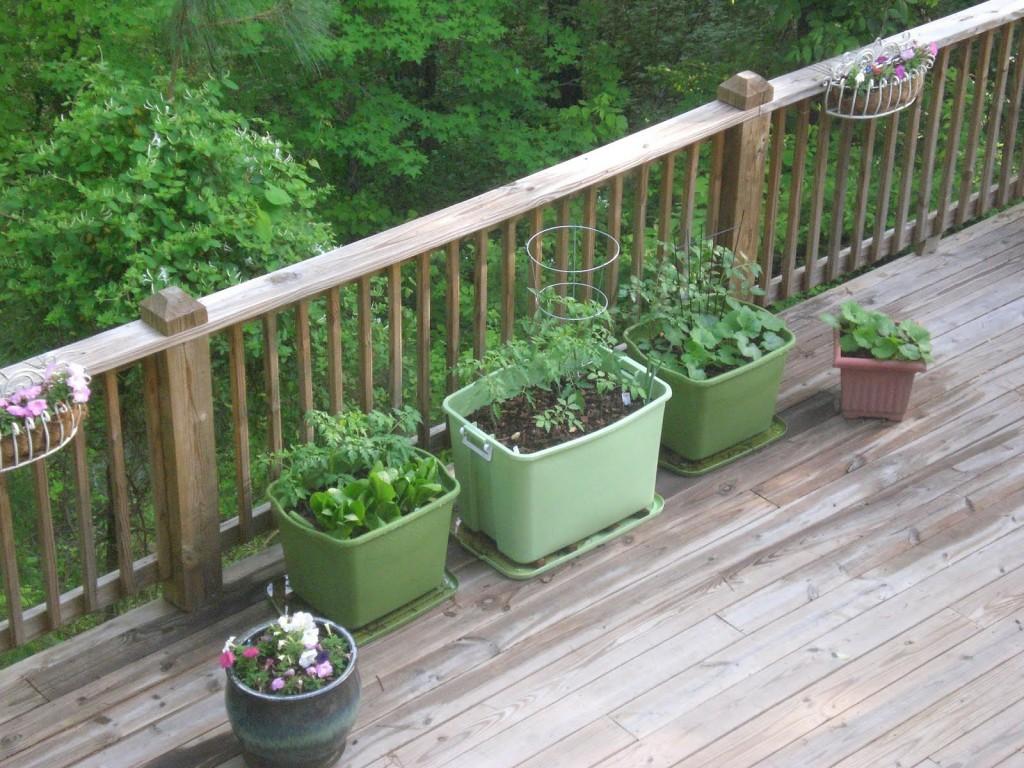 backporch garden