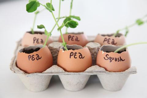 gardening-tips 3