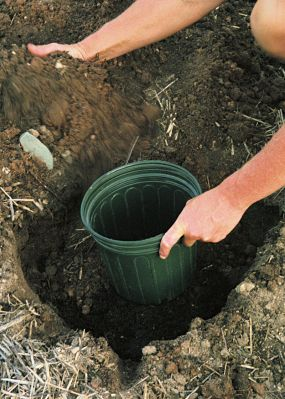 gardening tips 4