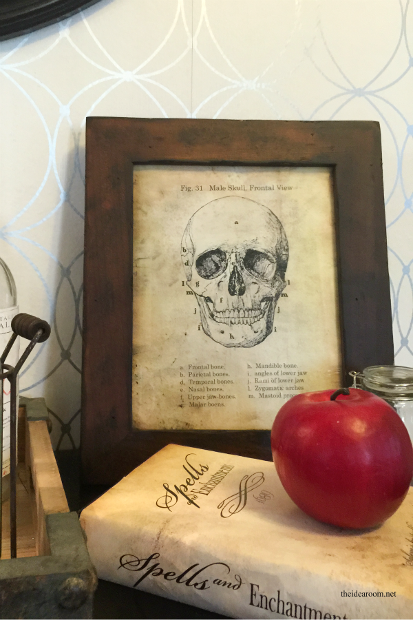Halloween | Looking to add a vintage skull anatomy sign to your Halloween Decor? Print this free Halloween Printable to add to your Halloween decorations.