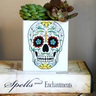 Sugar Skull Succulent
