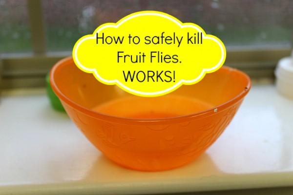 fruit flies vinegar sugar content in fruit