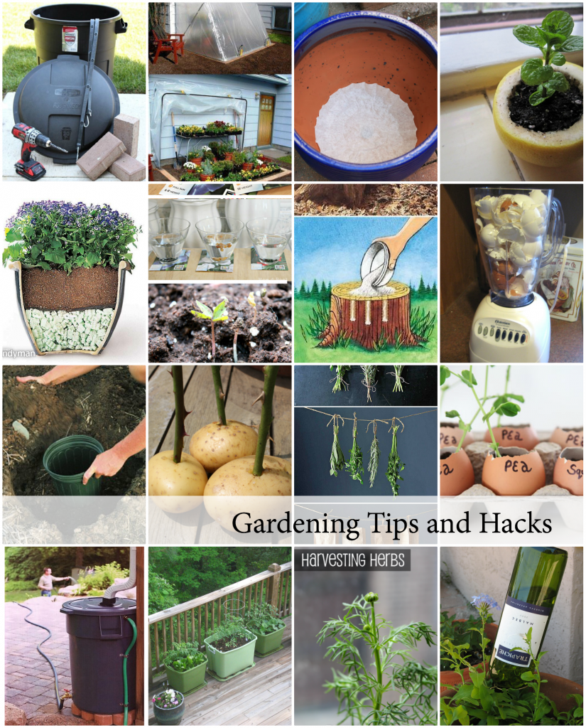 Gardening-Tips-and-Hacks-Cover-825x1024