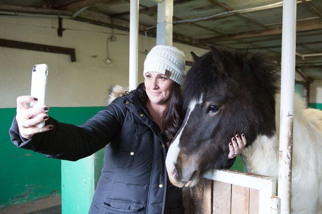 icelandic horse selfie