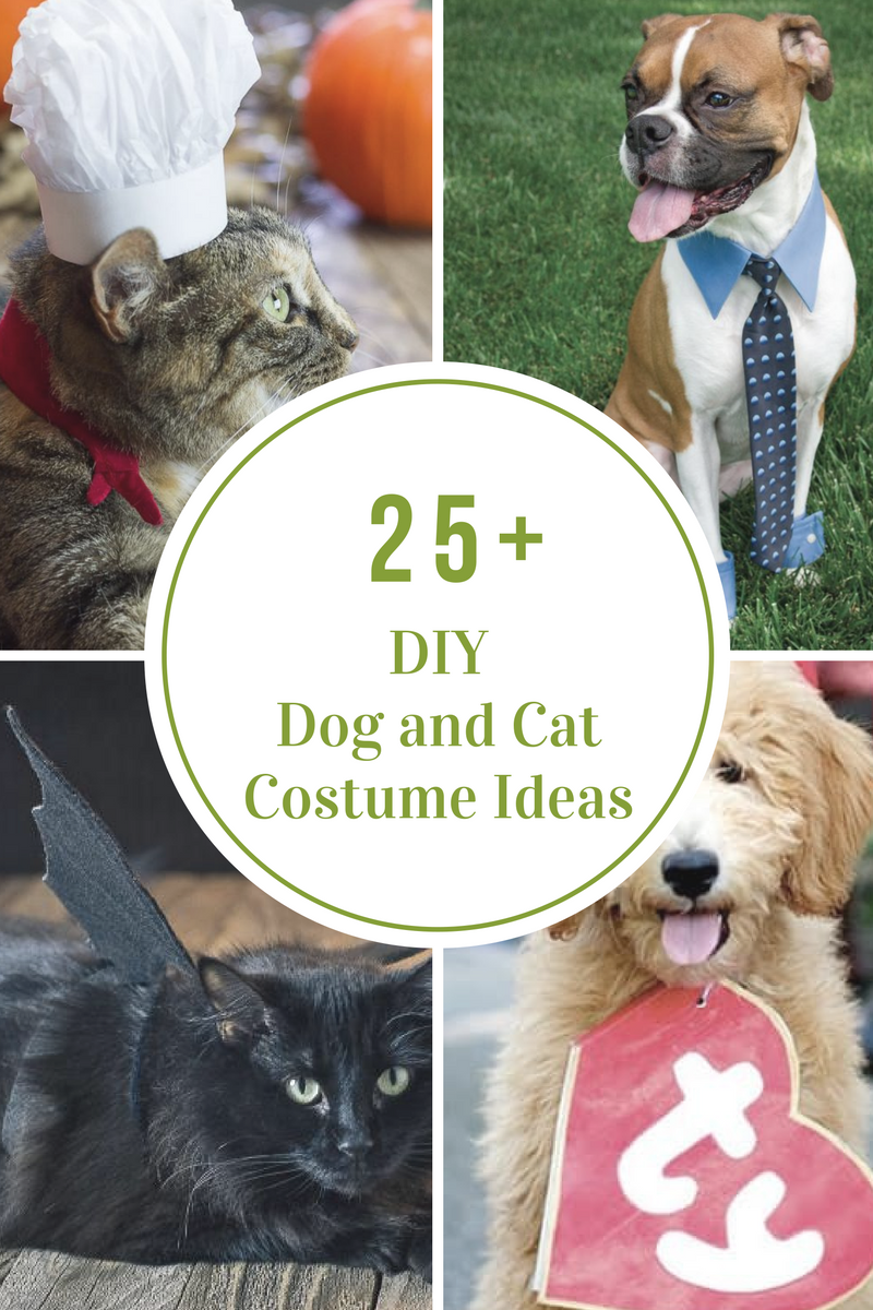Diy Dog And Cat Costume Ideas The