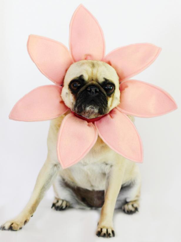 ci-carla-wiking_halloween-dog-costume-flower_v-jpg-rend-hgtvcom-616-822