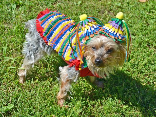 ci_kelly-owen-halloween-dog-costume-felt-pinata-beauty2-jpg-rend-hgtvcom-616-462