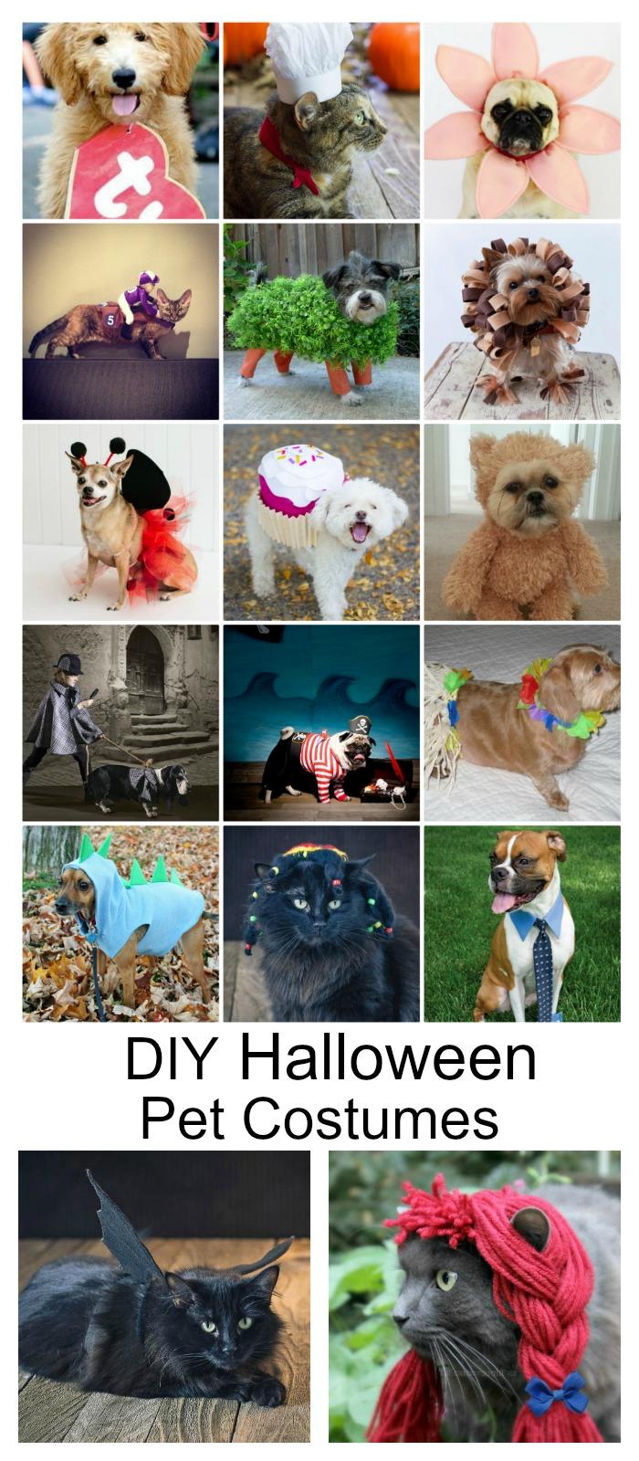diy-halloween-pet-costumes-pin