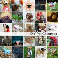 DIY Dog and Cat Costume Ideas