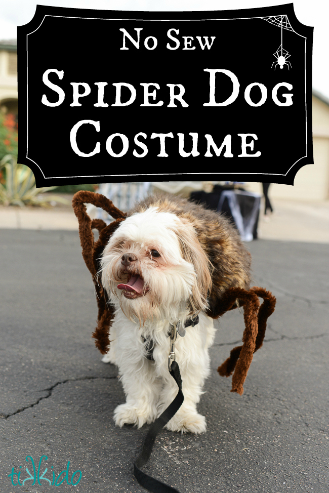 spiders-den-trunk-or-treat-text