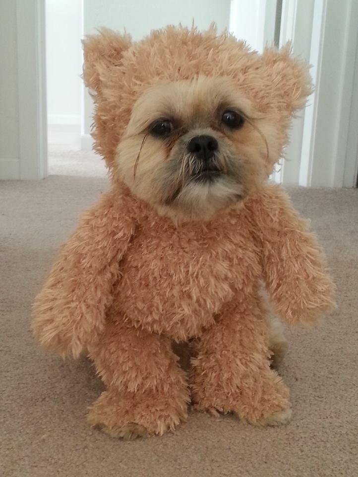 munchkin-teddy-bear-1
