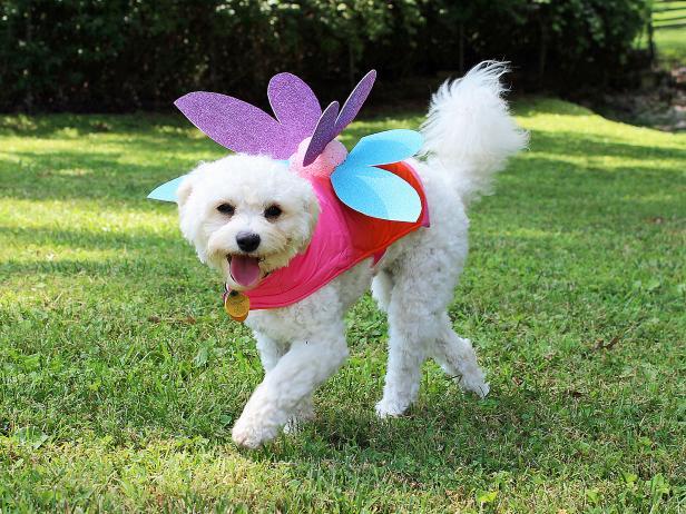 original_camille-smith-fairy-dog-costume-phoebe-beauty-jpg-rend-hgtvcom-616-462