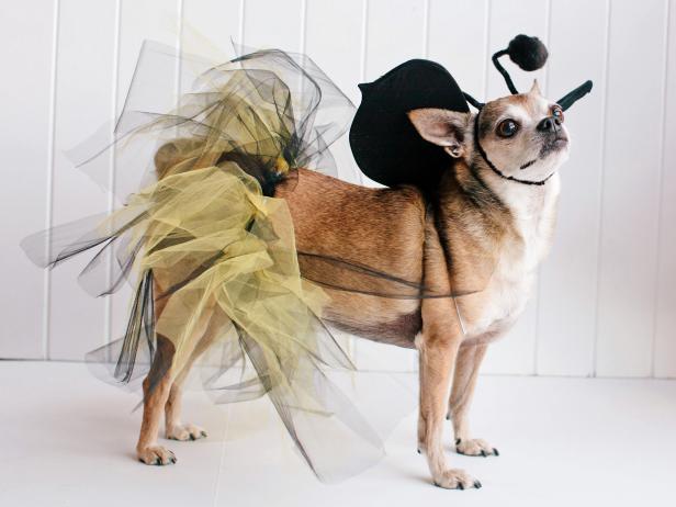 original_kim-stoegbauer-halloween-costume-dog-bumblebee-beauty-jpg-rend-hgtvcom-616-462
