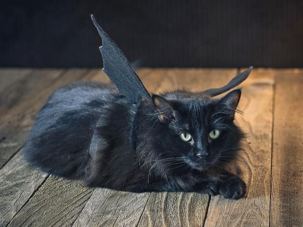 original_sam-henderson-cat-halloween-costume-bat-wings-beauty-horiz2-jpg-rend-hgtvcom-616-462