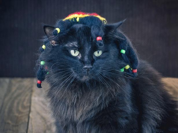 original_sam-henderson-rasta-cat-halloween-costume-beauty-horiz2-jpg-rend-hgtvcom-616-462