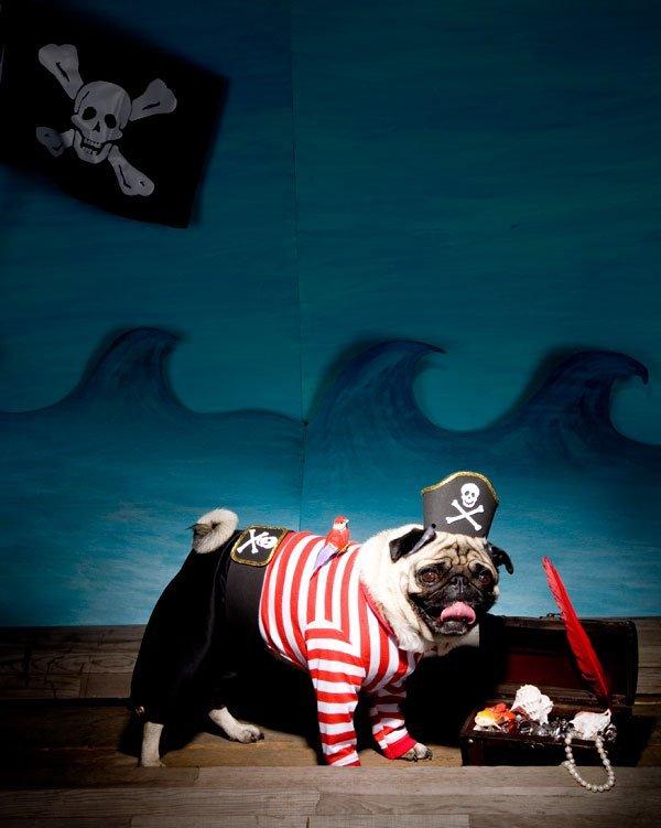 pug-pirate-opener
