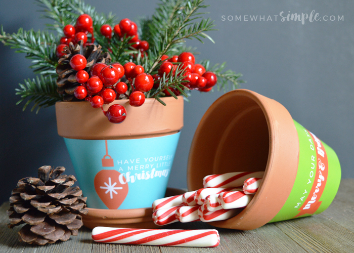 christmas-plant-wrappers-main